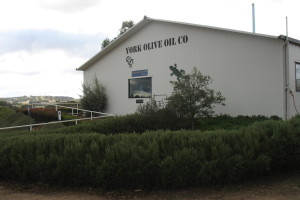 York olive oil external